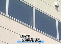 防虫ガラス